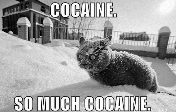 Who doesn't love a cocaine cat picture first thing in the morning....?