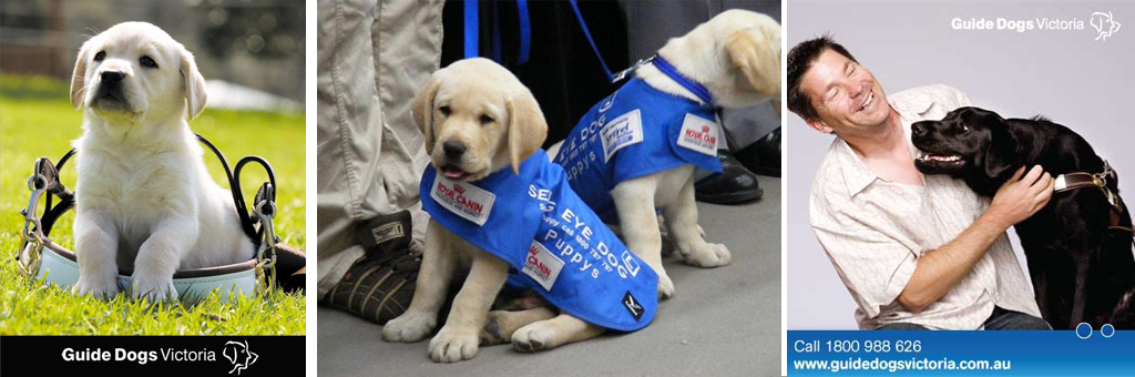 NoGrey_Blog_Tips_GuideDogs05