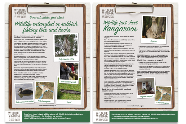 Fact sheets about Kangaroos