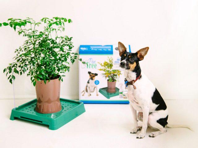 The Pee Tree Packaging