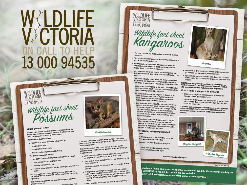 feature-image-wildlife-victoria